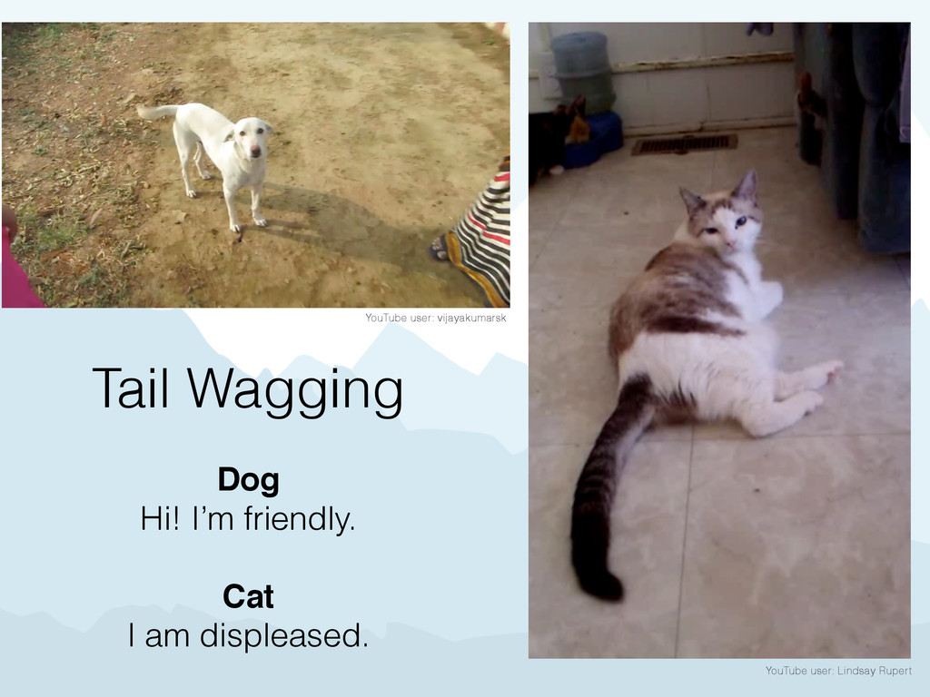 YouTube user: Lindsay Rupert Tail Wagging Dog H...