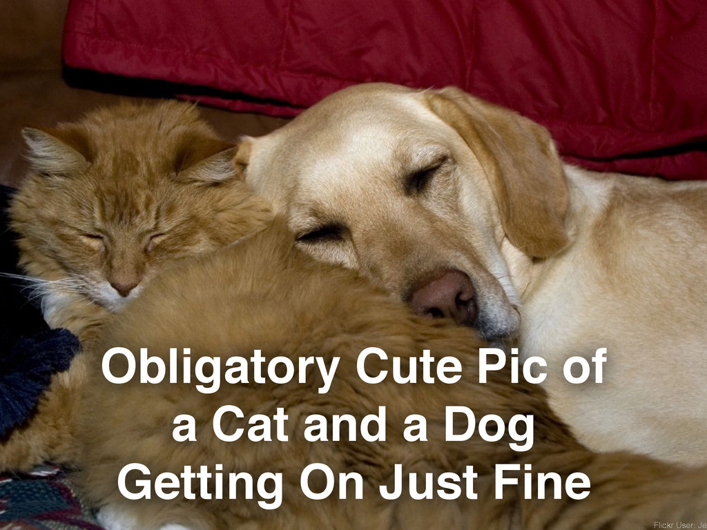 Obligatory Cute Pic of a Cat and a Dog Getting ...