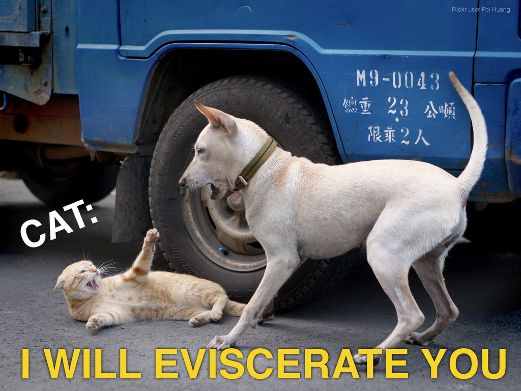 Flickr user Pei Huang CAT: I WILL EVISCERATE YOU
