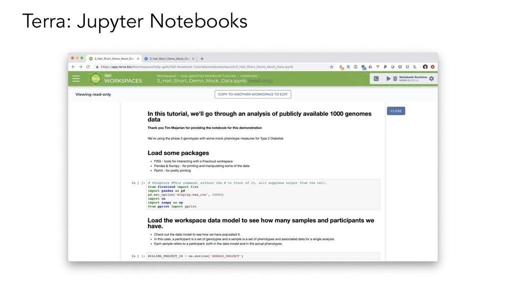 Terra: Jupyter Notebooks