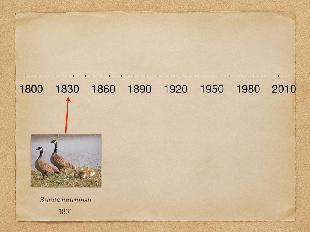 Branta hutchinsii 1831 1800 1830 1860 1890 1920...