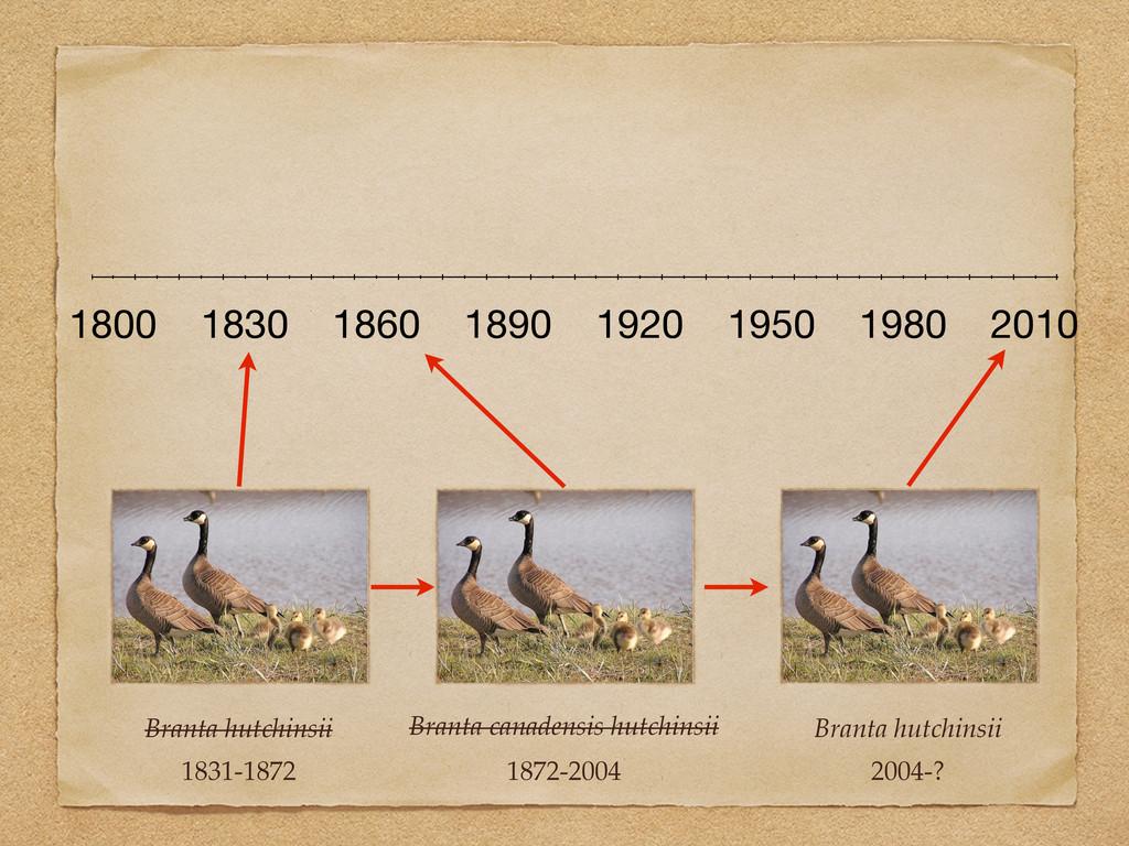 Branta hutchinsii 1831-1872 1800 1830 1860 1890...
