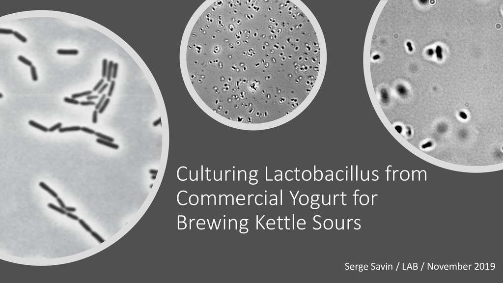Culturing Lactobacillus from Commercial Yogurt ...