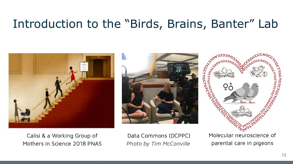 "Introduction to the ""Birds, Brains, Banter"" Lab..."