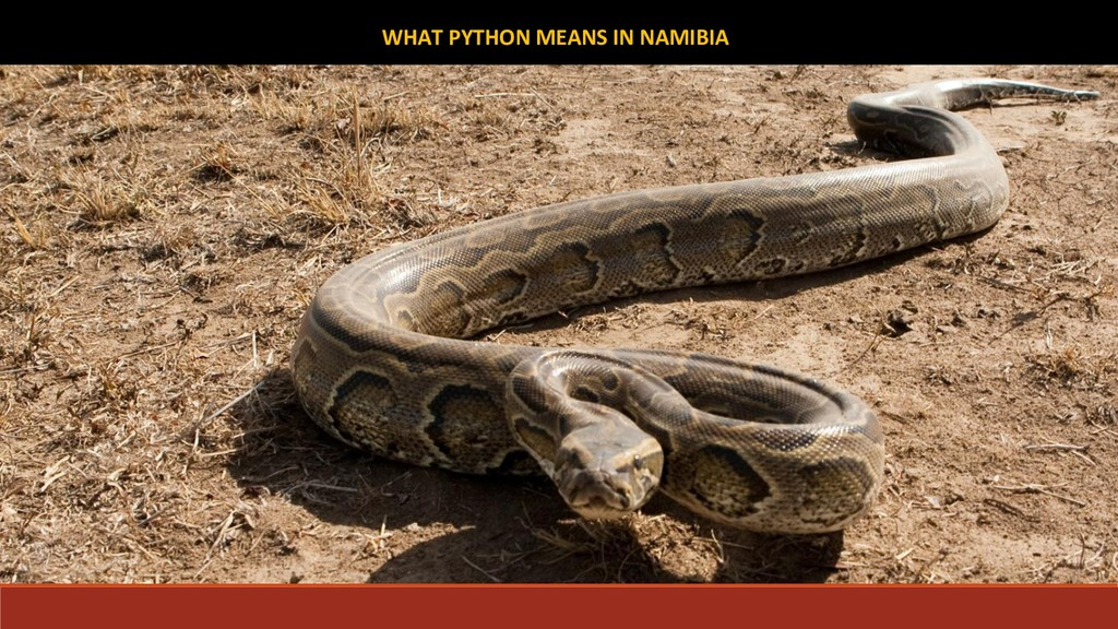 WHAT PYTHON MEANS IN NAMIBIA
