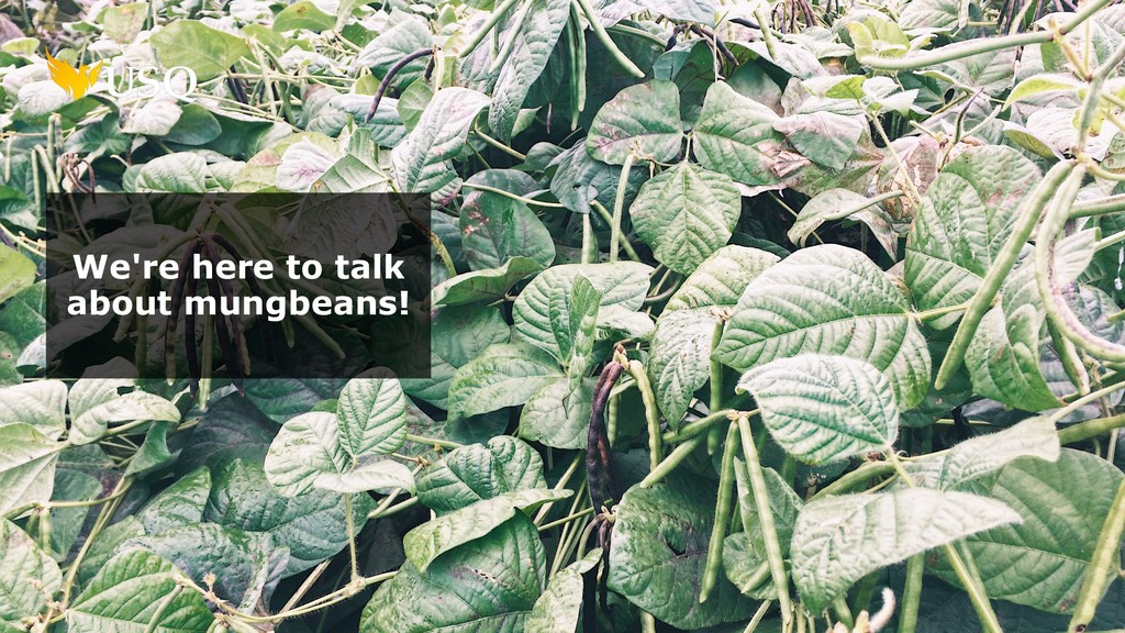 We're here to talk about mungbeans!