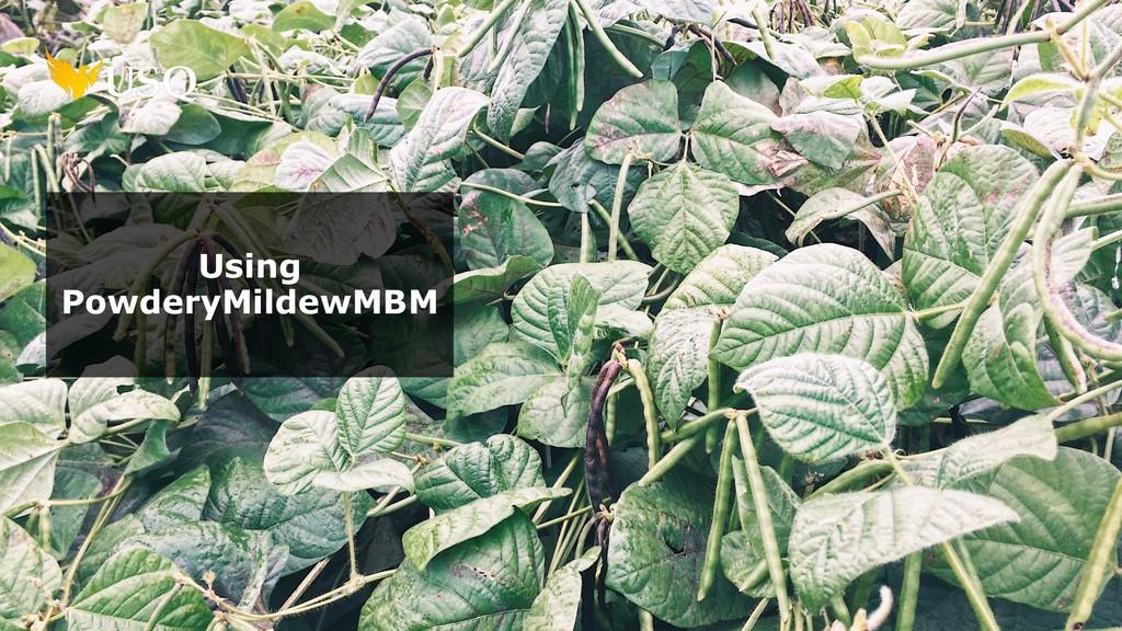 Using PowderyMildewMBM