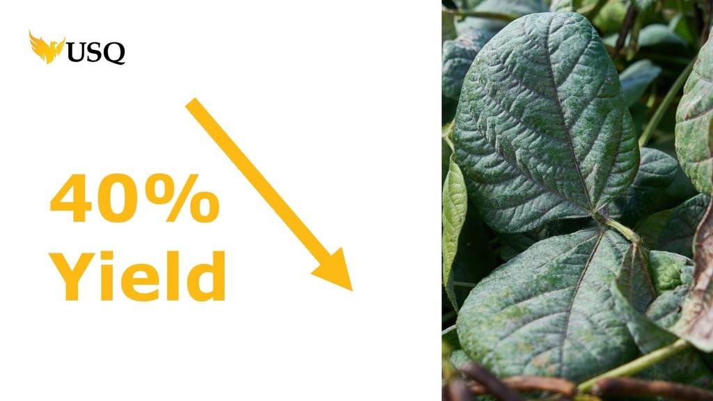 40% Yield
