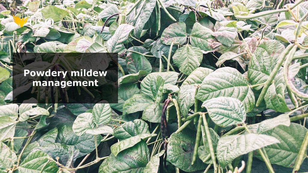 Powdery mildew management