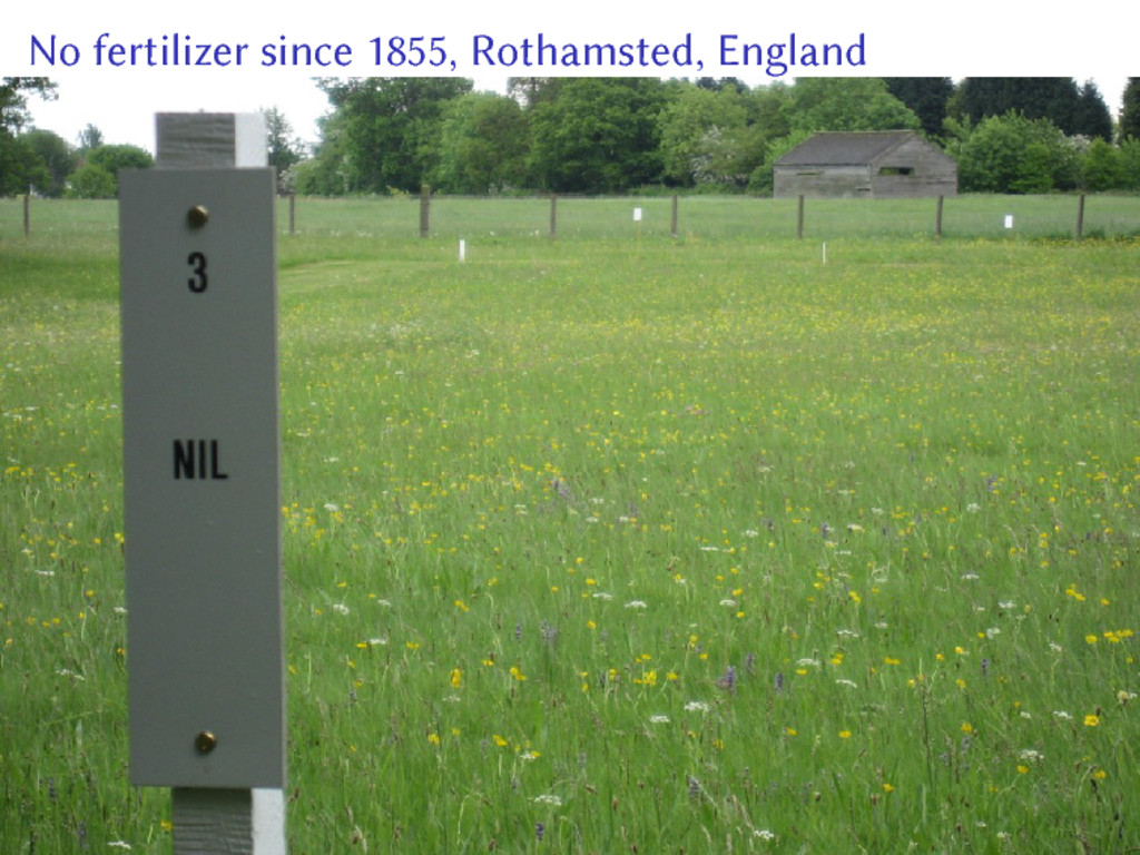 No fertilizer since 1855, Rothamsted, England