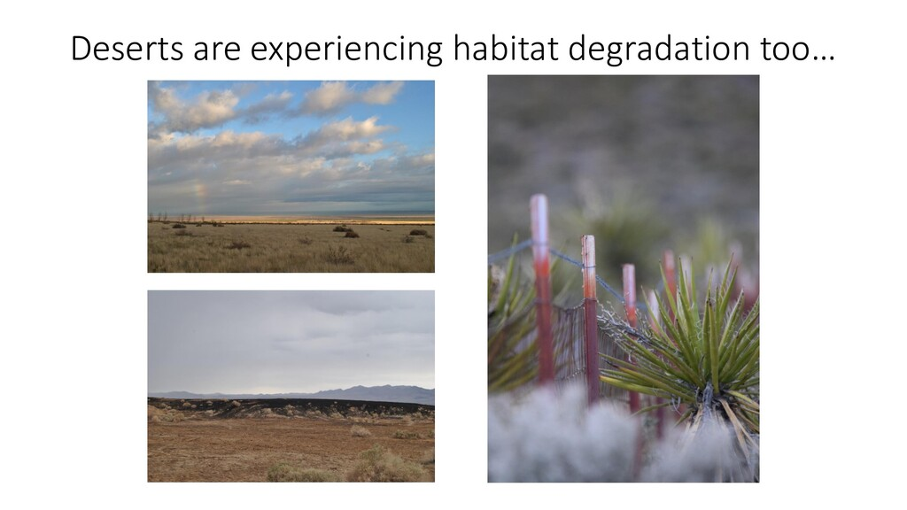 Deserts are experiencing habitat degradation to...
