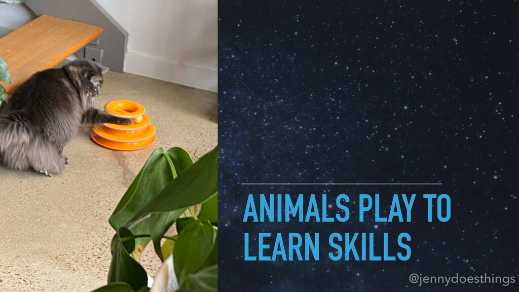 ANIMALS PLAY TO LEARN SKILLS @jennydoesthings
