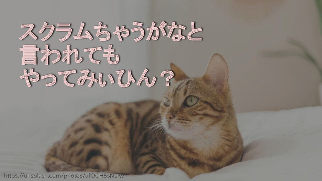 ©2020 RAKUS Co., Ltd. スクラムちゃうがなと 言われても やってみぃひん?...