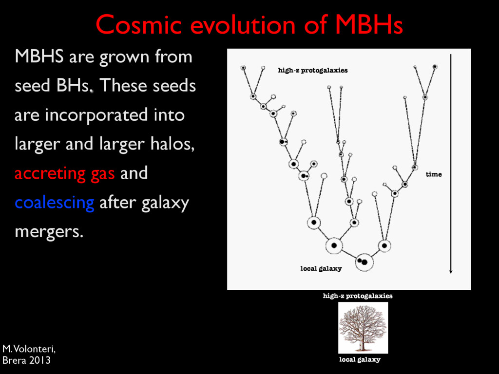 MBHS are grown from seed BHs. These seeds are i...