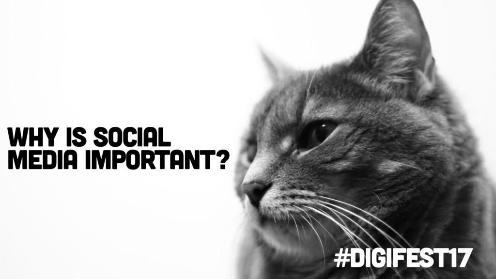 #digifest17 Why is social media important?
