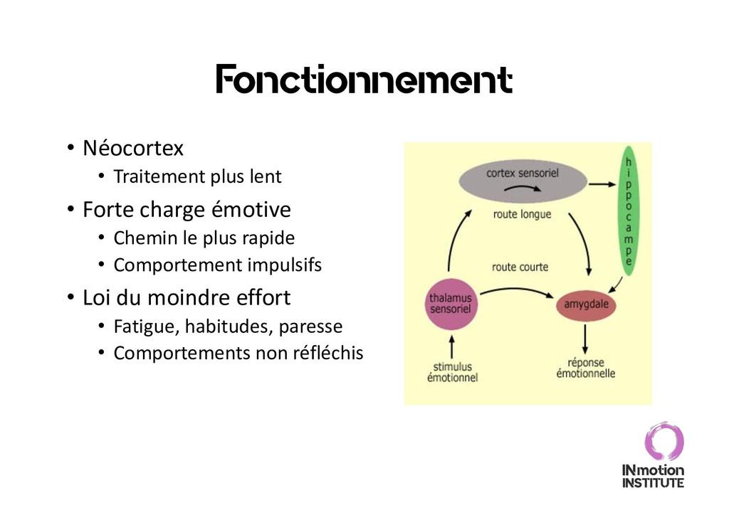 Fonctionnement • Néocortex • Traitement plus le...