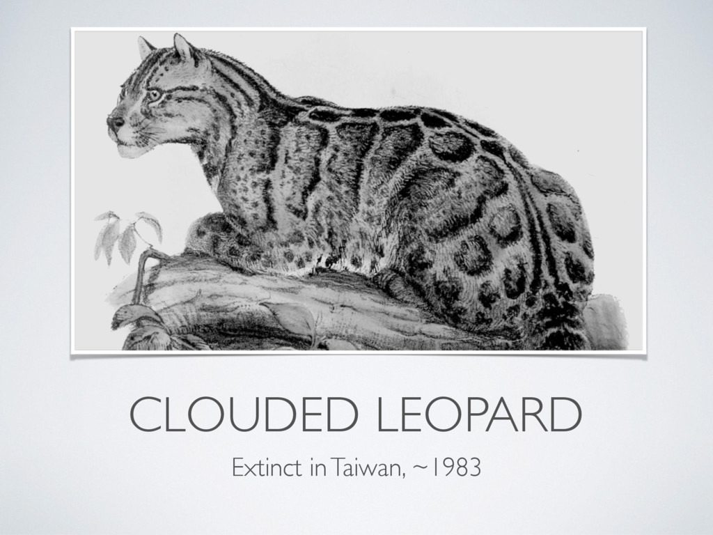 CLOUDED LEOPARD Extinct in Taiwan, ~1983