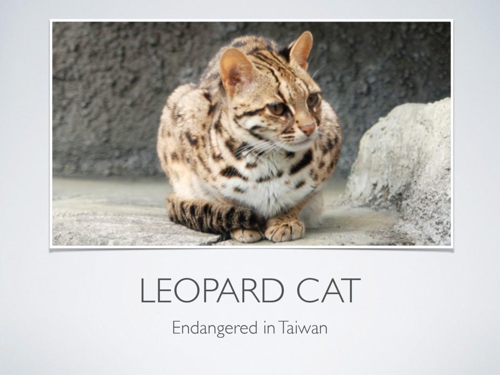 LEOPARD CAT Endangered in Taiwan