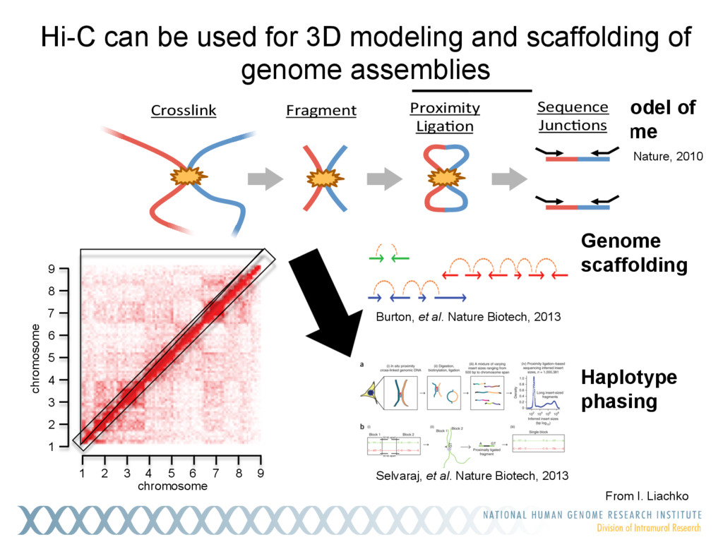 3D model of genome Hi-C can be used for 3D mode...