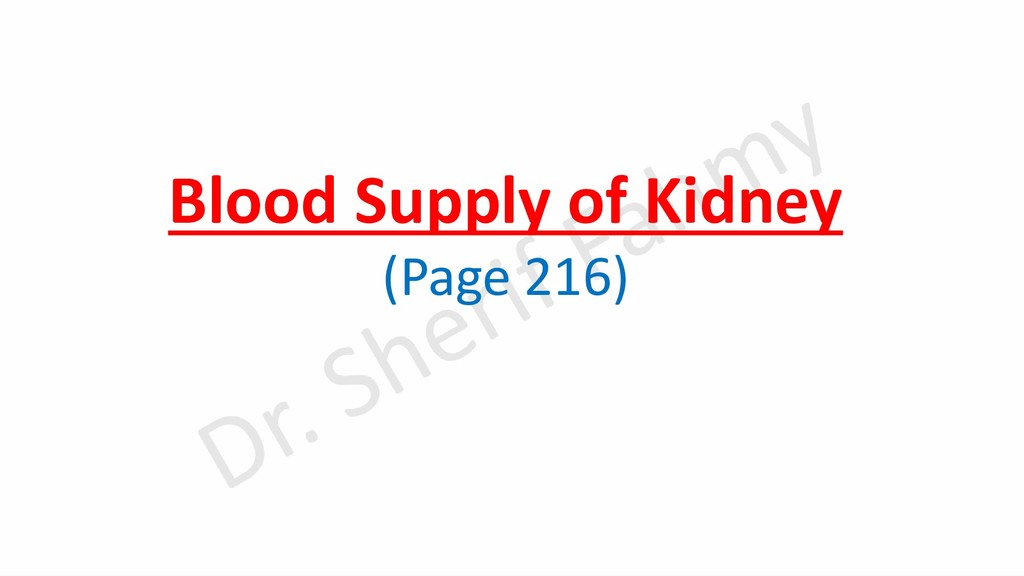 Blood Supply of Kidney (Page 216)