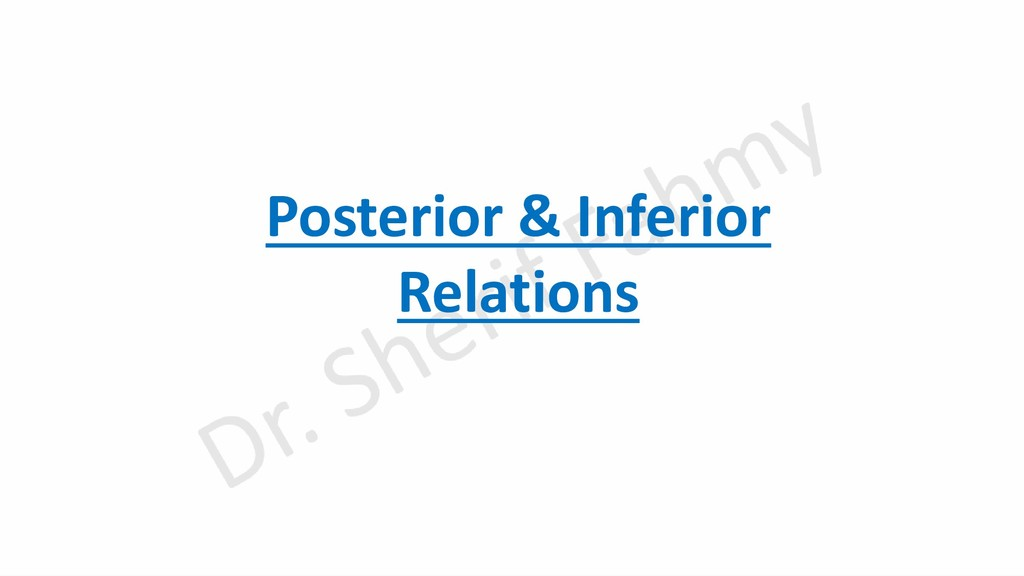 Posterior & Inferior Relations