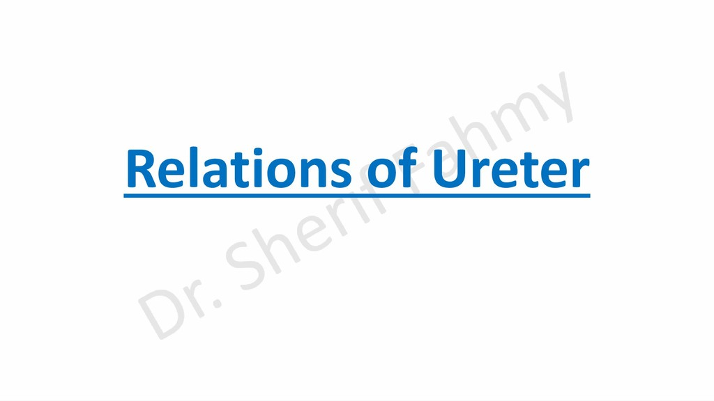 Relations of Ureter