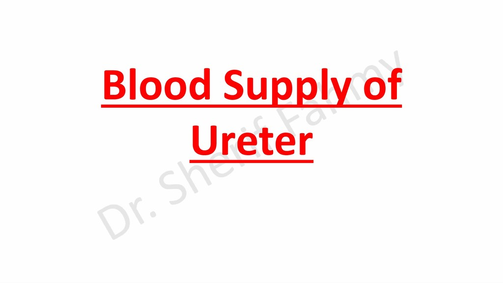 Blood Supply of Ureter
