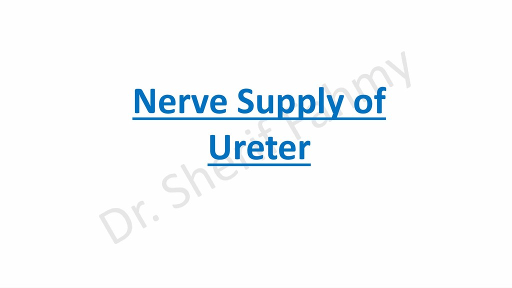 Nerve Supply of Ureter