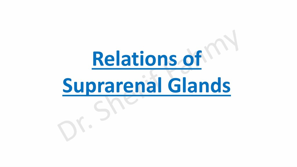Relations of Suprarenal Glands