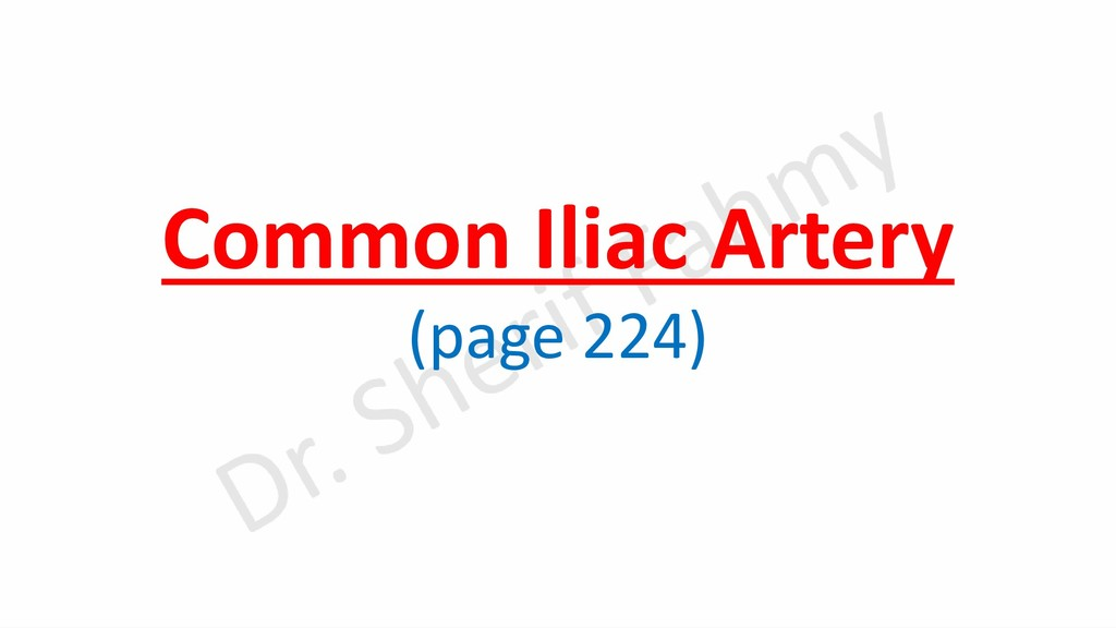 Common Iliac Artery (page 224)