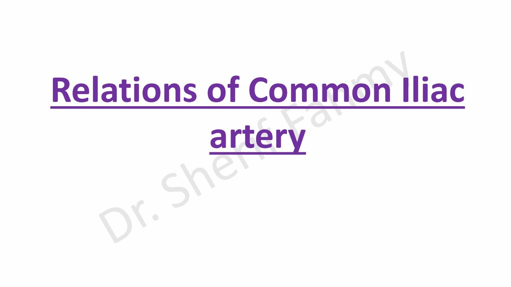 Relations of Common Iliac artery