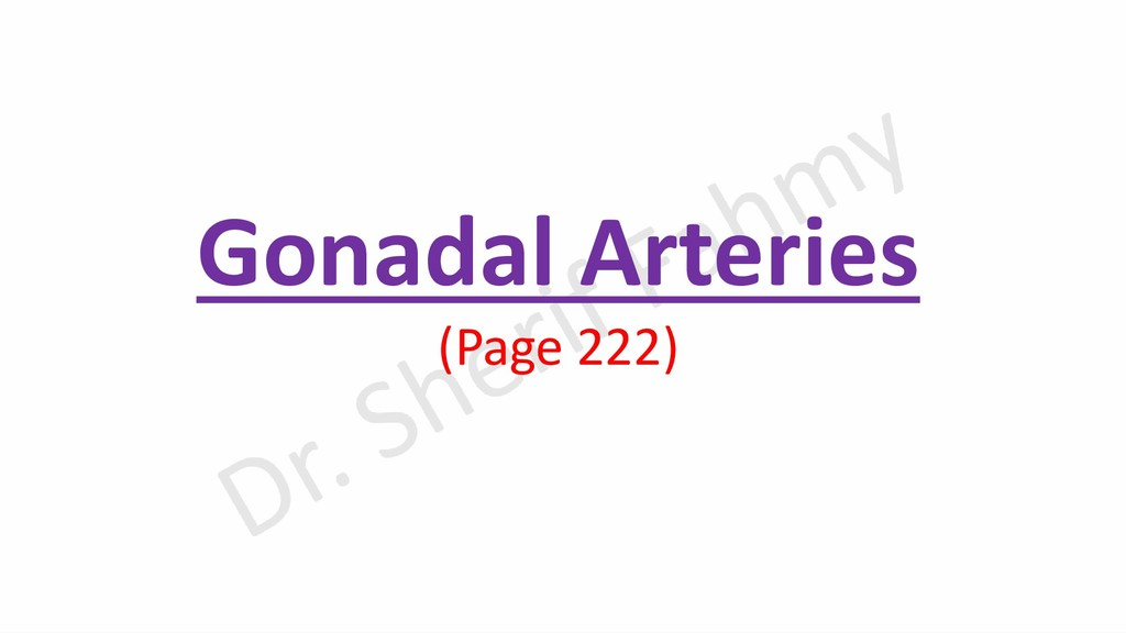 Gonadal Arteries (Page 222)