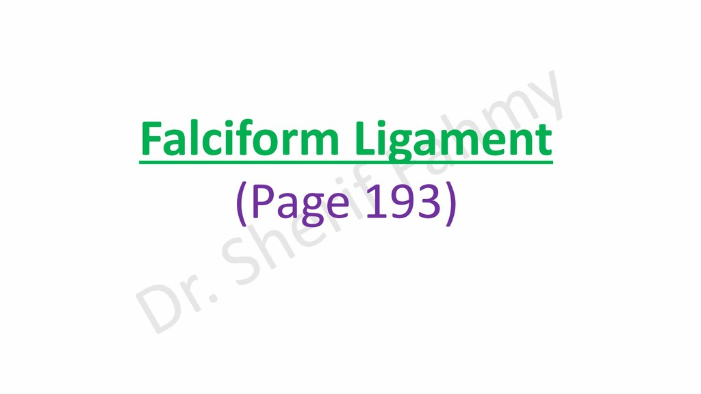 Falciform Ligament (Page 193)