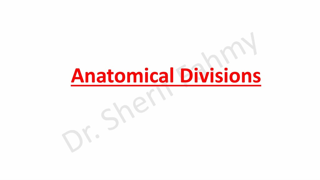 Anatomical Divisions