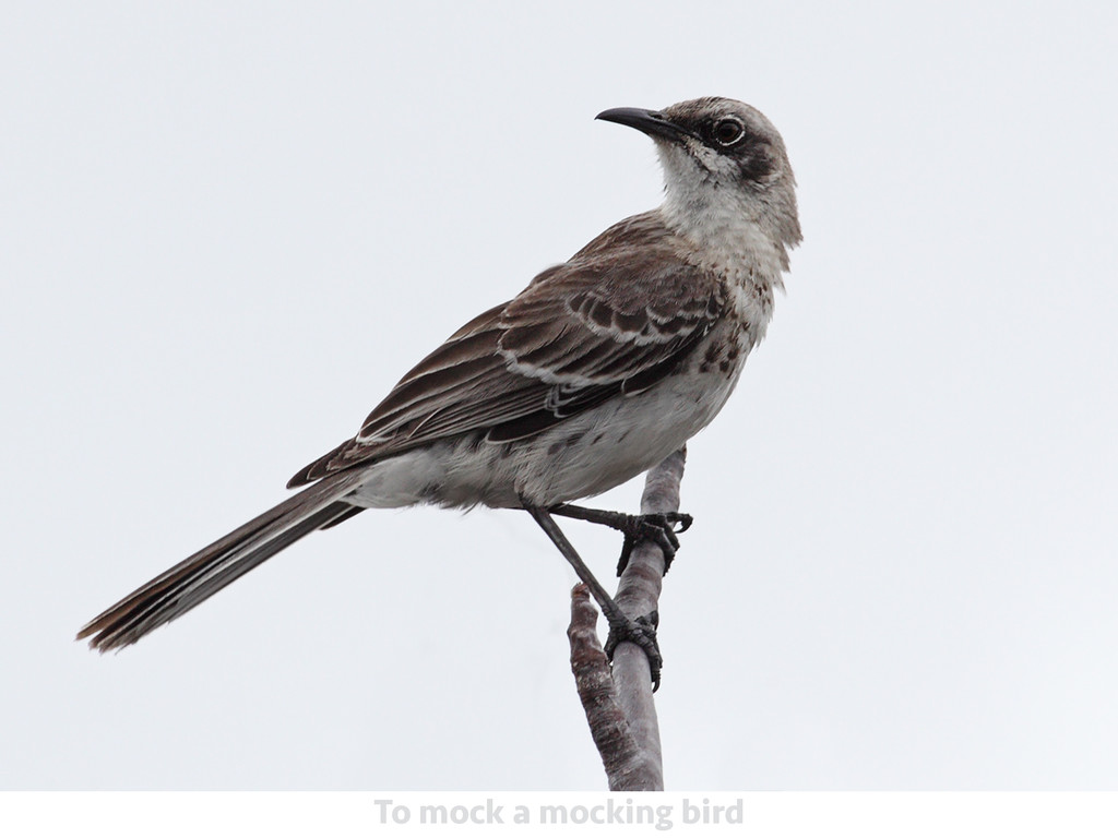RSpec Mocks To mock a mocking bird