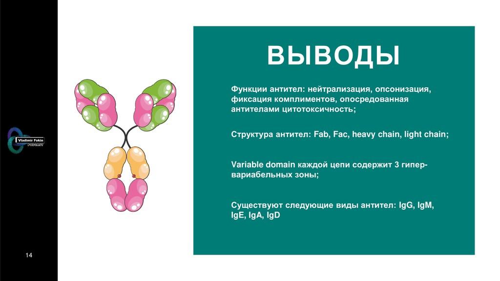 14 ВЫВОДЫ Функции антител: нейтрализация, опсон...