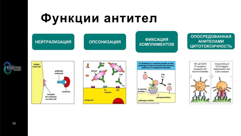 10 Функции антител НЕЙТРАЛИЗАЦИЯ ОПСОНИЗАЦИЯ ФИ...
