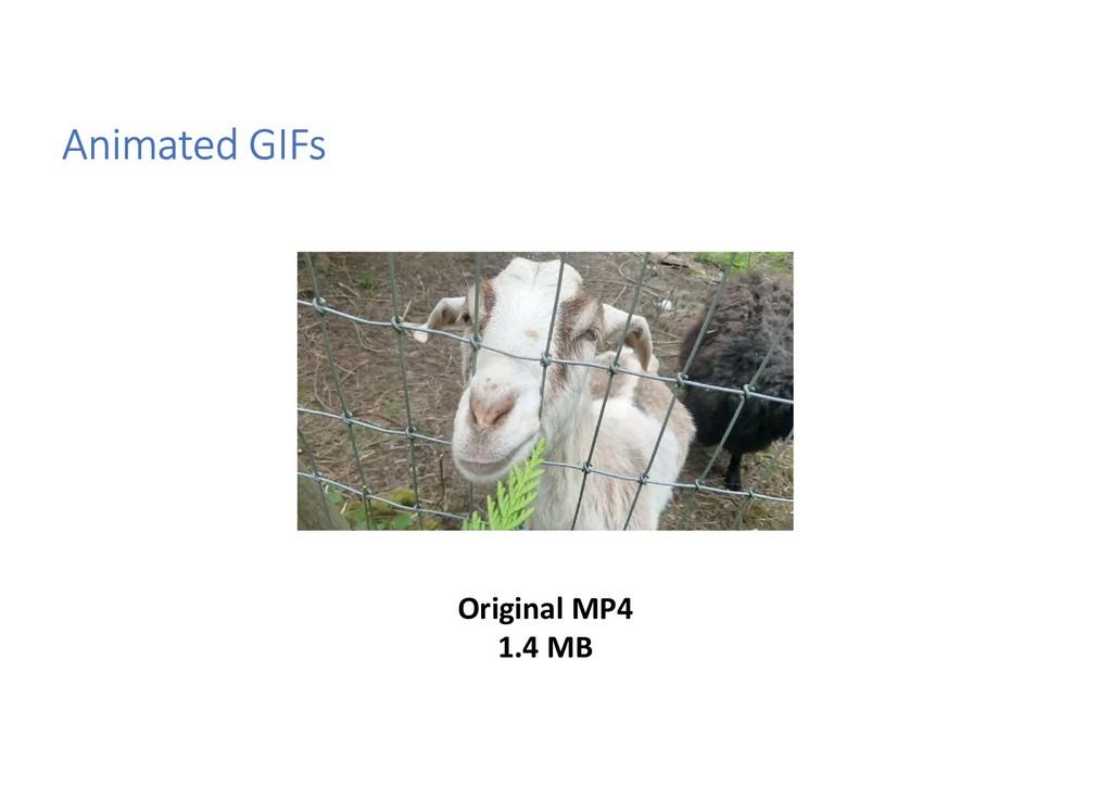 Animated GIFs Original MP4 1.4 MB