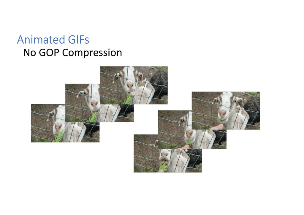 Animated GIFs No GOP Compression