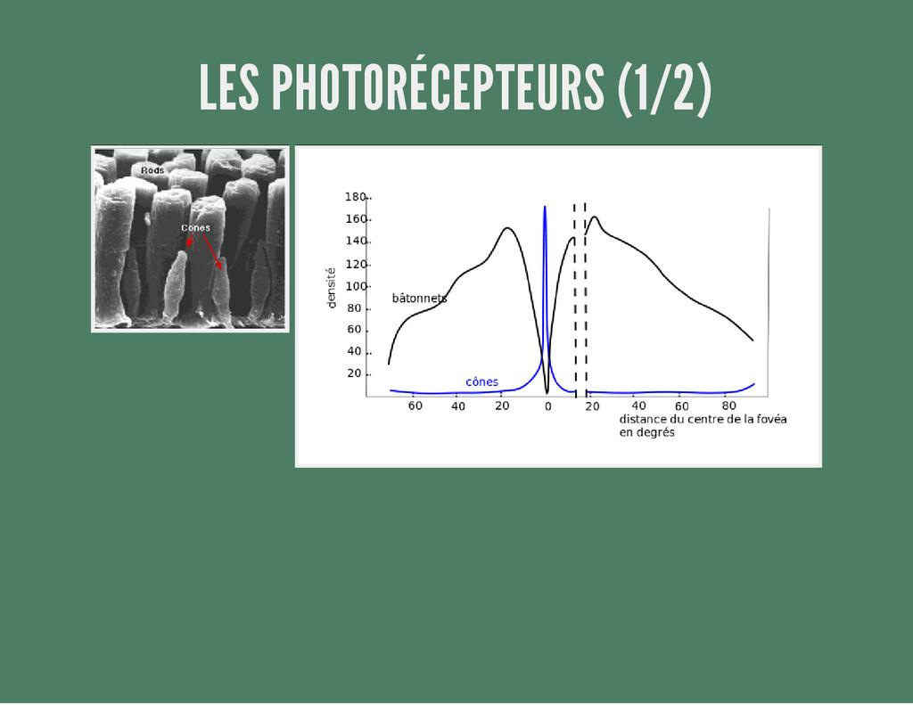 LES PHOTORÉCEPTEURS (1/2)