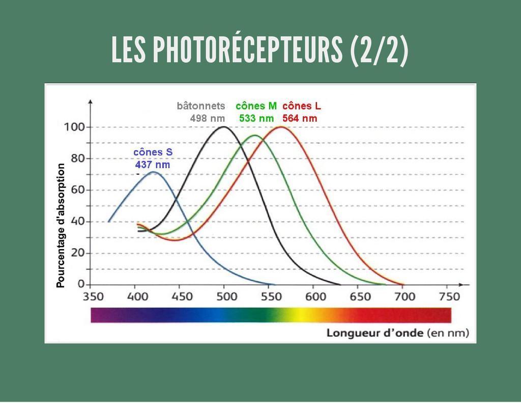 LES PHOTORÉCEPTEURS (2/2)