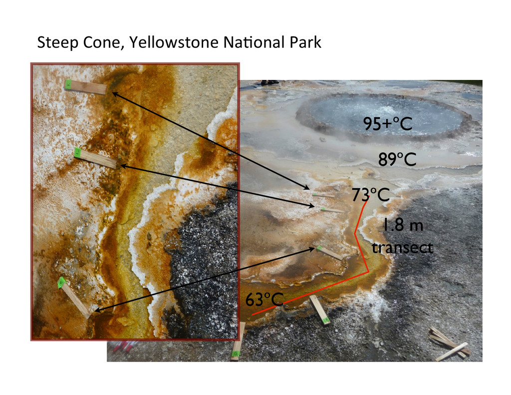 Temperature gradients in Yellowstone Hot Spring...