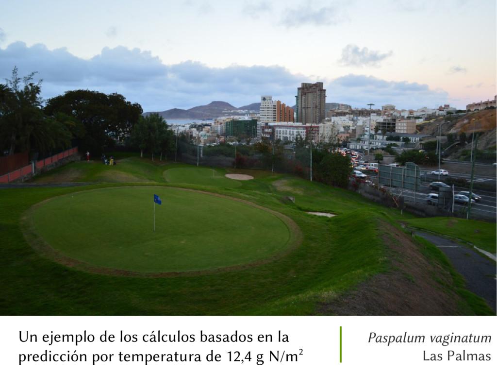 Paspalum vaginatum Las Palmas Un ejemplo de los...