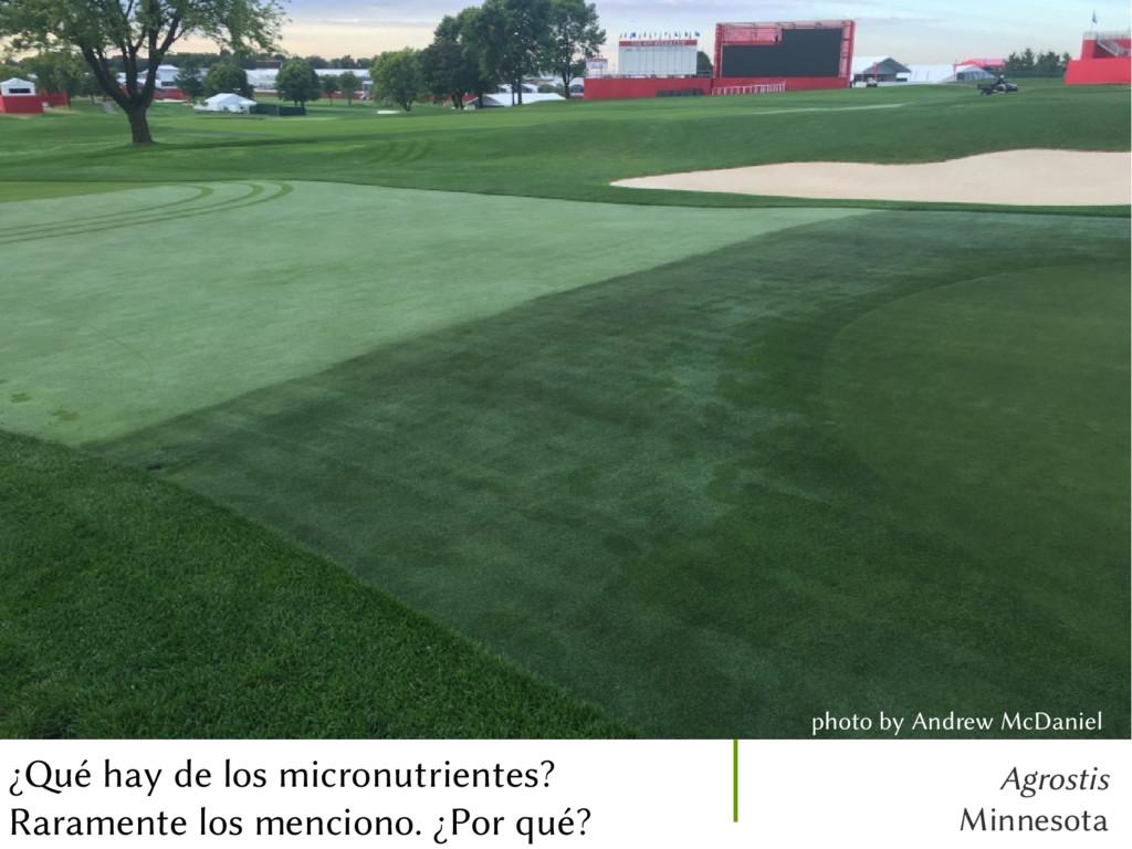 Agrostis Minnesota ¿Qué hay de los micronutrien...