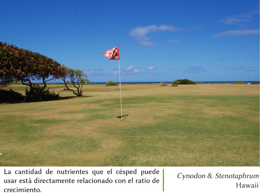 Cynodon & Stenotaphrum Hawaii La cantidad de nu...