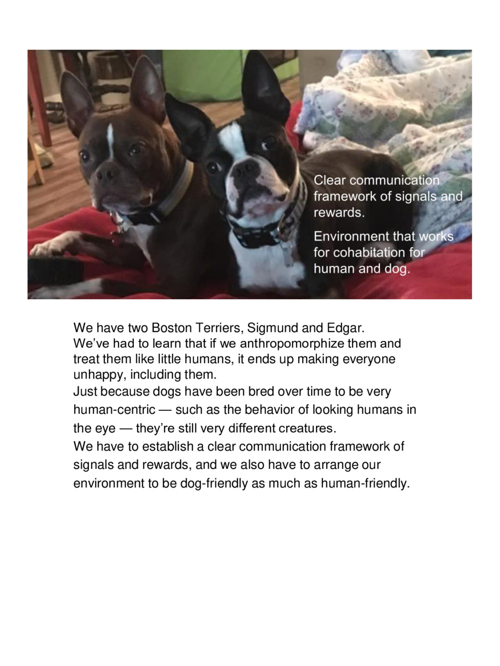 We have two Boston Terriers, Sigmund and Edgar....