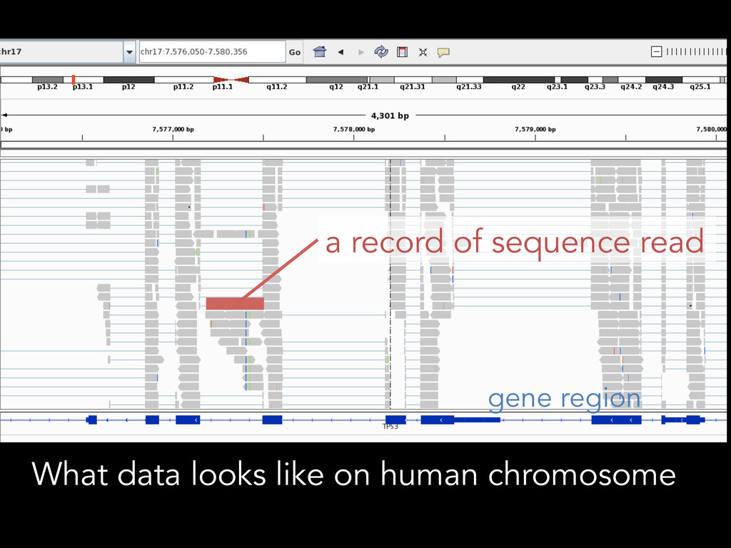 What data looks like on human chromosome a reco...
