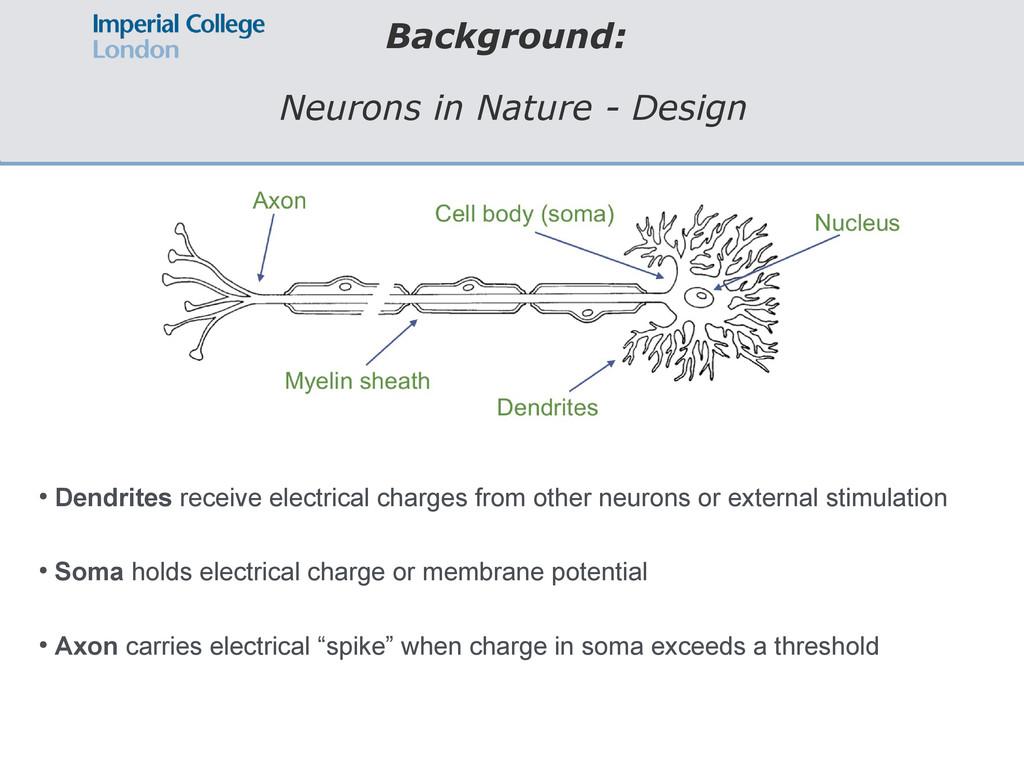 Background: Neurons in Nature - Design ● Dendri...