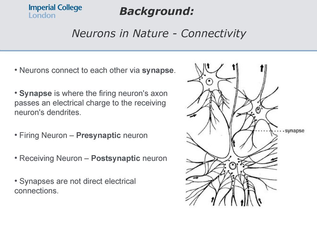 Background: Neurons in Nature - Connectivity ● ...