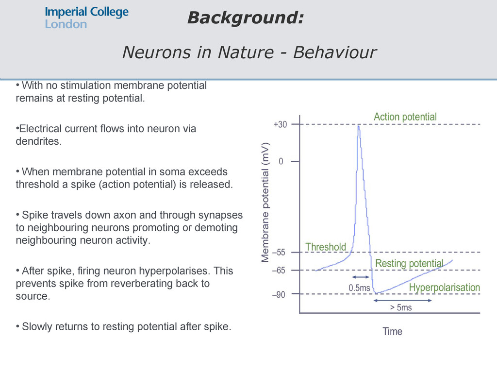 Background: Neurons in Nature - Behaviour ● Wit...